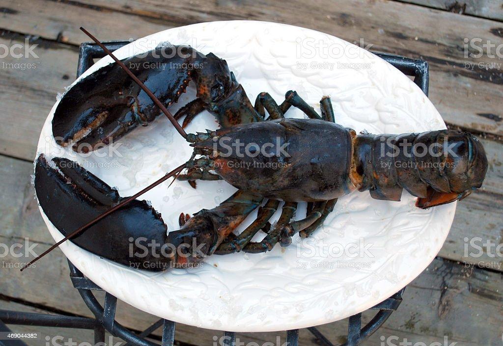 Big 2 lb Lobster stock photo