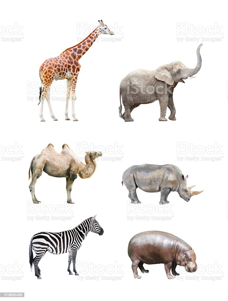 Big african mammals. stock photo