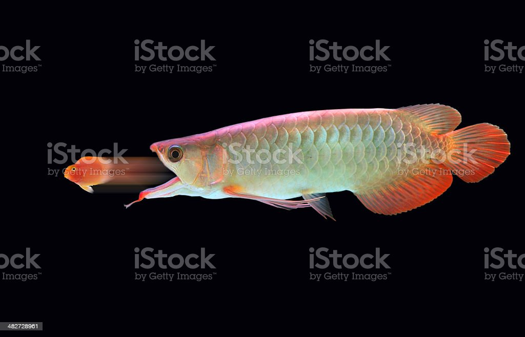 big  and little fish stock photo
