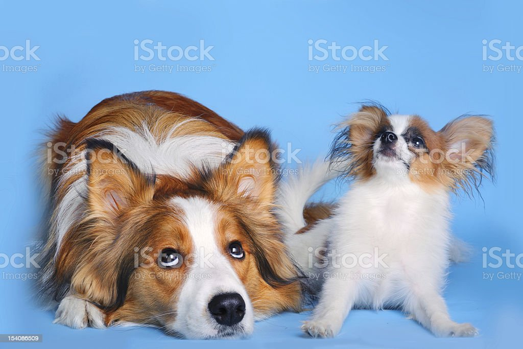 big and small dogs stock photo