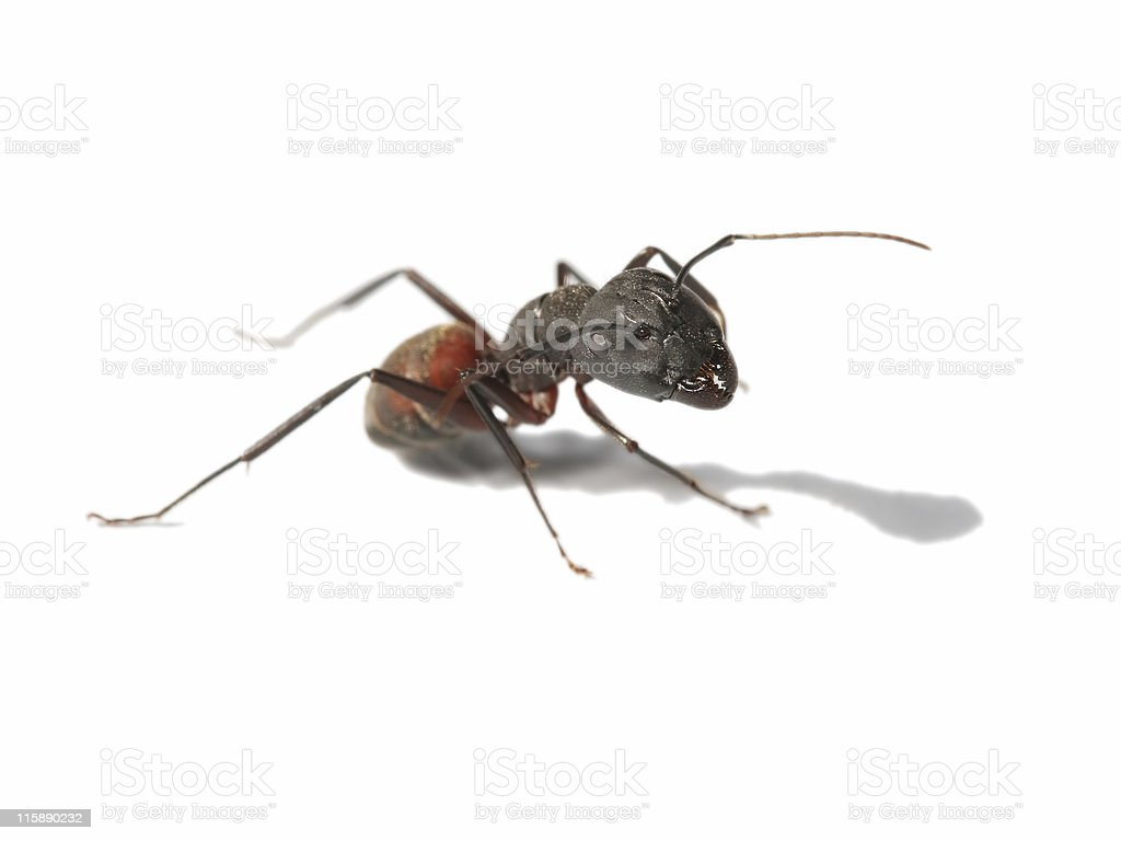 Big ant 3 royalty-free stock photo