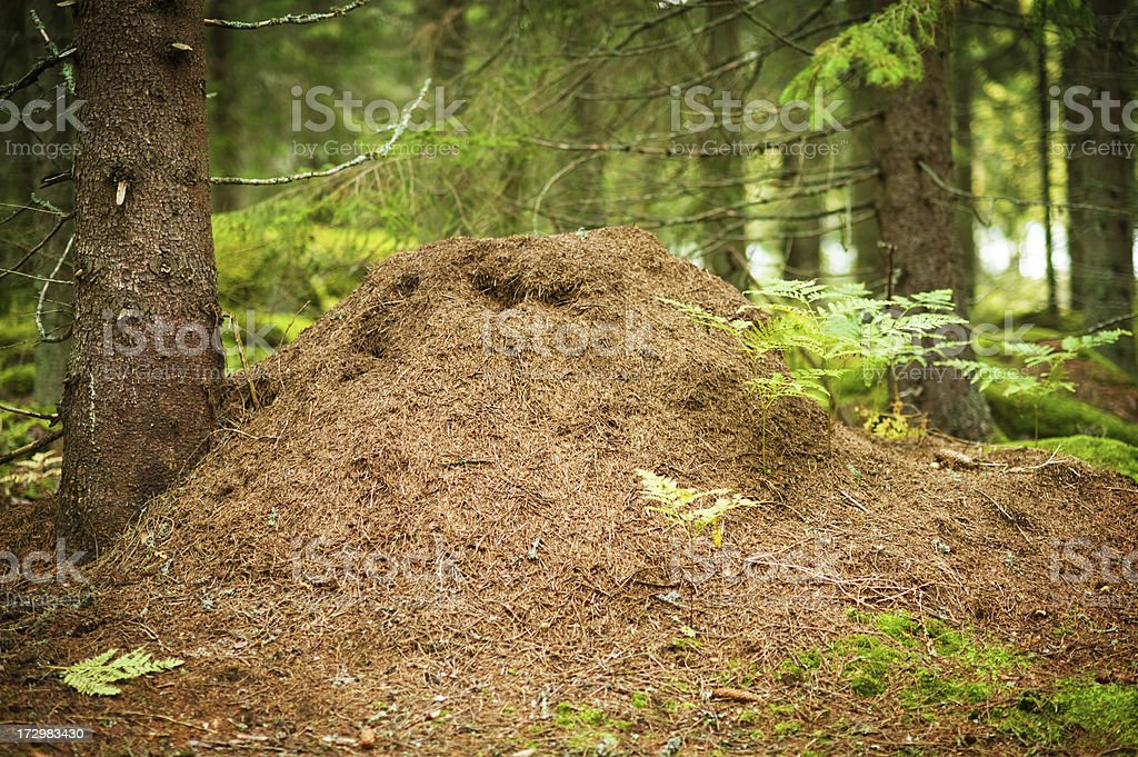 Big Anthill stock photo