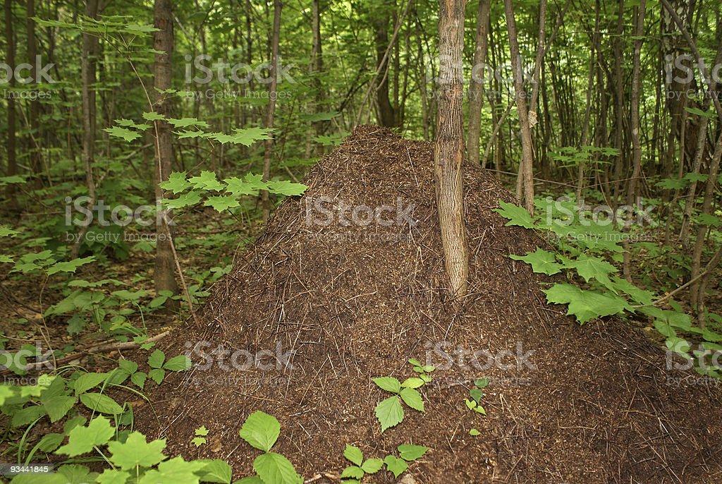 Big anthill royalty-free stock photo