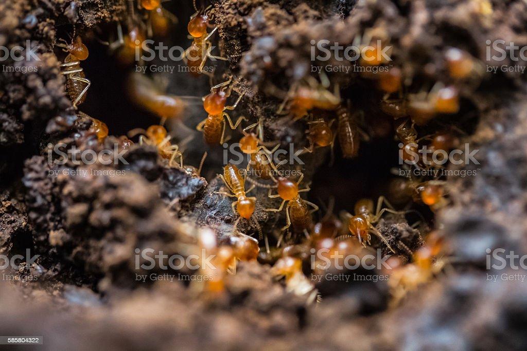 Big ants stock photo