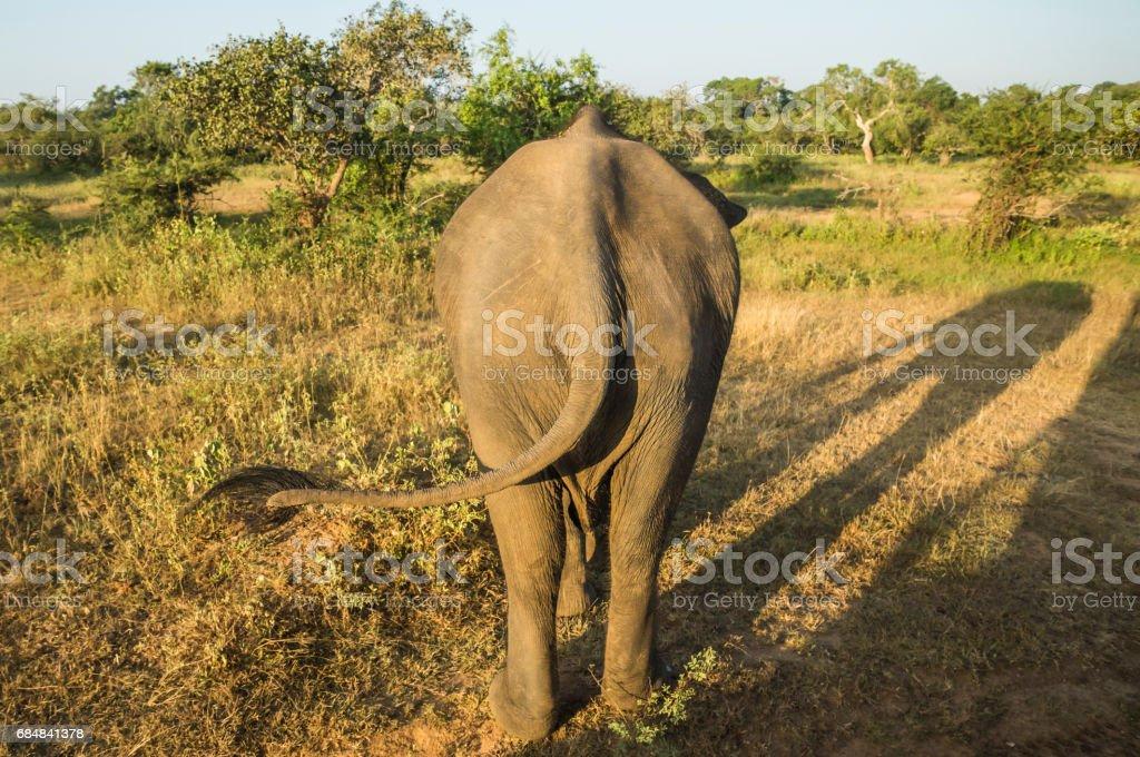africa, der große Arsch