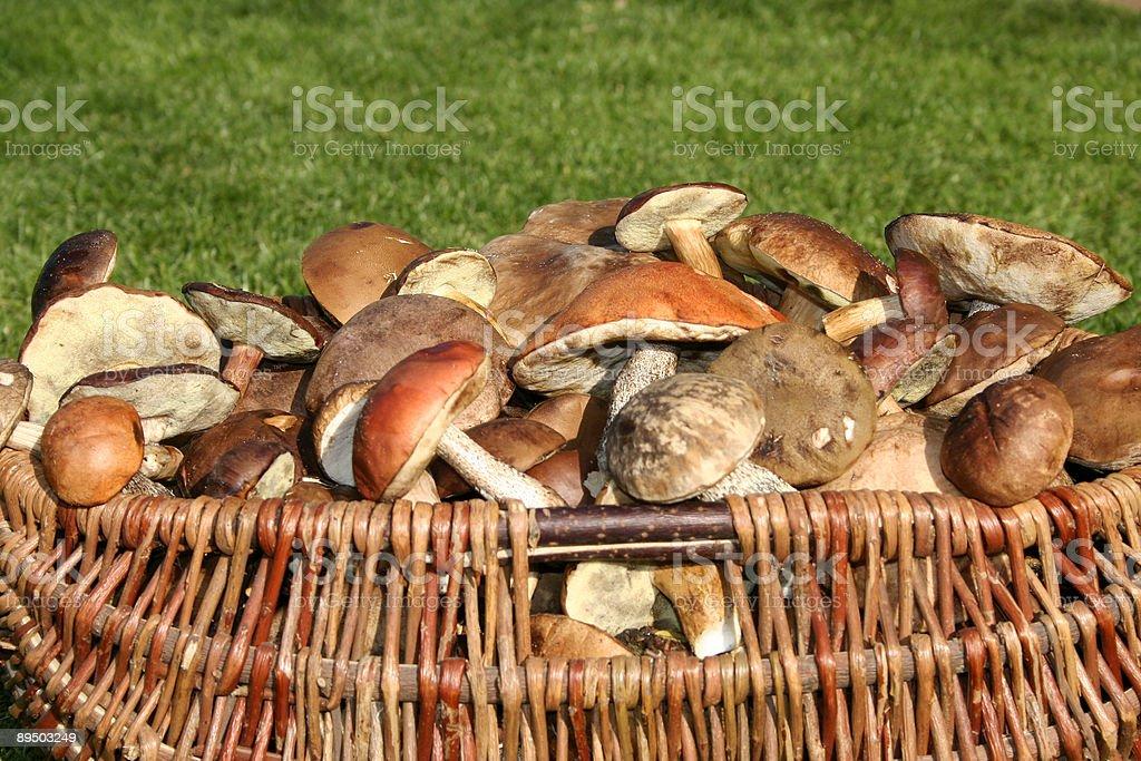 Big basket full of mushrooms royaltyfri bildbanksbilder