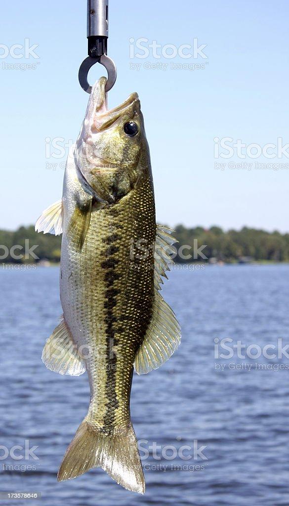 Big Bass stock photo
