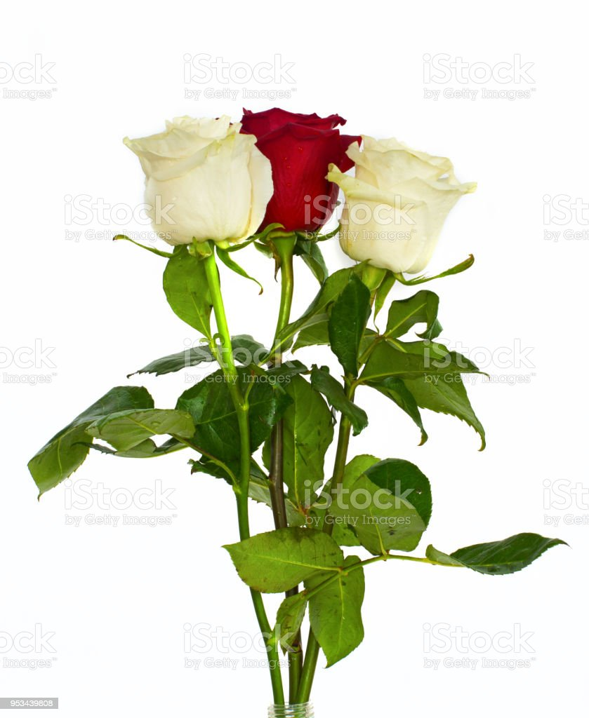Big Beautiful Bouquet Of Roses Red Blue White And Green Flowers On A