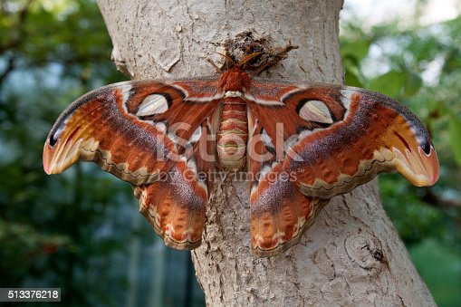 istock Big beautiful butterfly 513376218