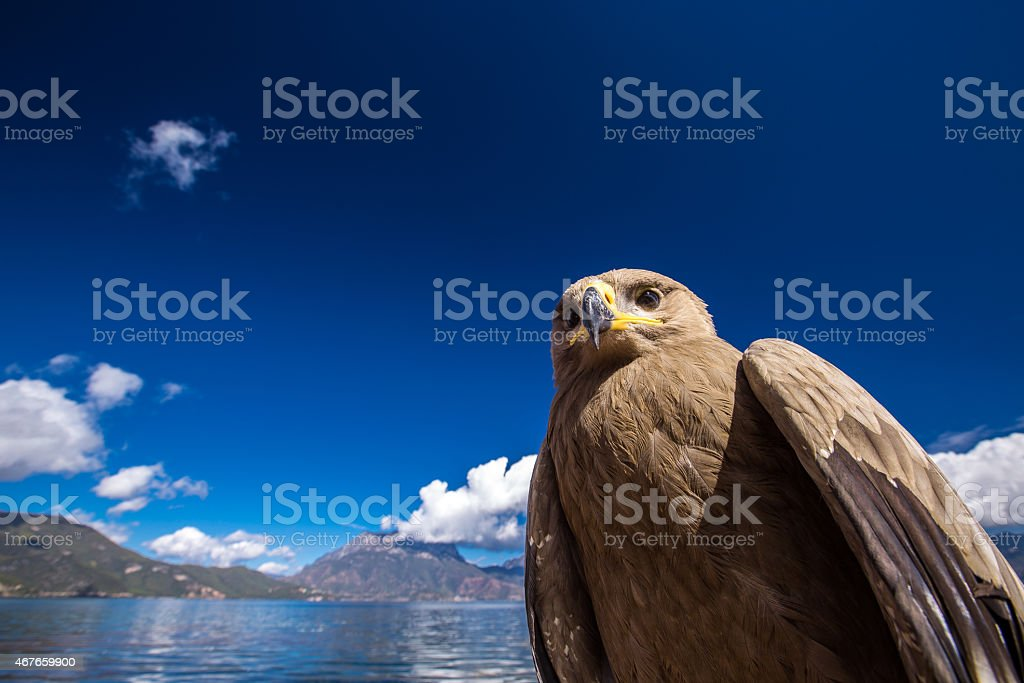 Big bird on Lugu lake stock photo