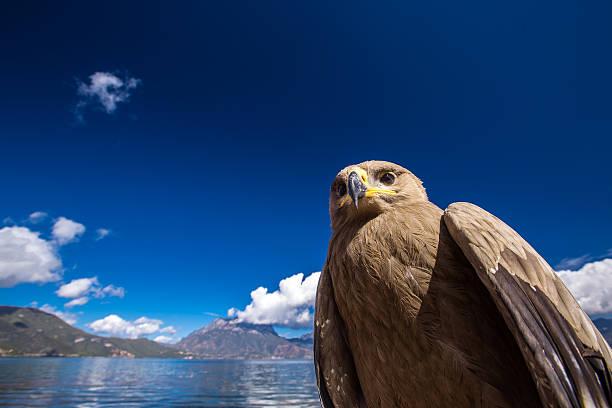 Big bird on Lugu lake stock photo