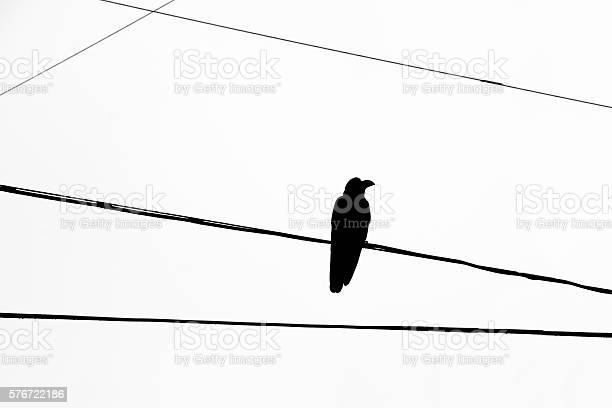 Free black crow Images, Pictures, and Royalty-Free Stock