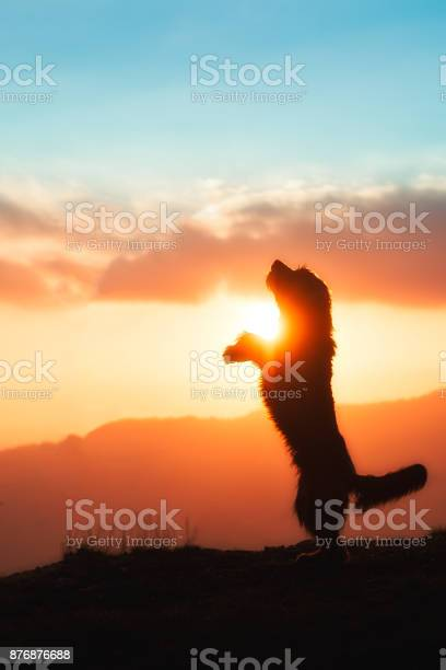 Big black dog raised on two paws in silhouette in a colorful sunset picture id876876688?b=1&k=6&m=876876688&s=612x612&h=dltovl chf0mb t uhqiohyhogupkj3pxllucbkpmg8=