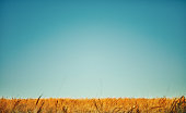 Big blue sky and field background