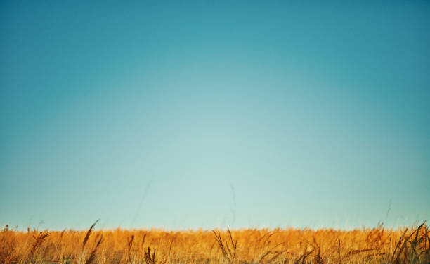 Big blue sky and field background stock photo