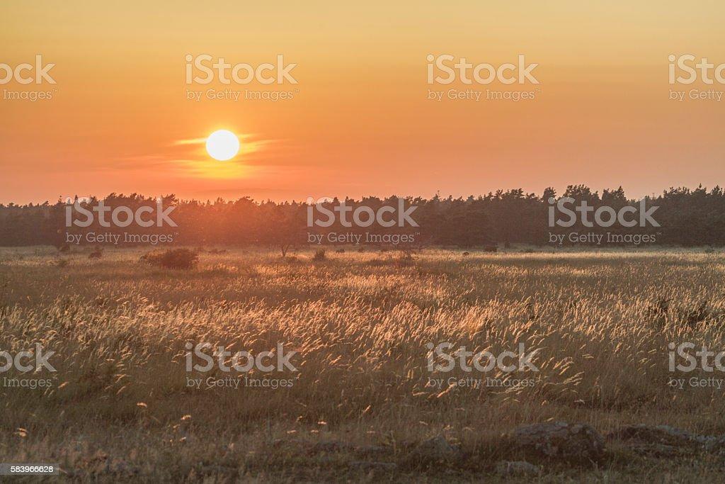 Big bluestem grass in sunset stock photo