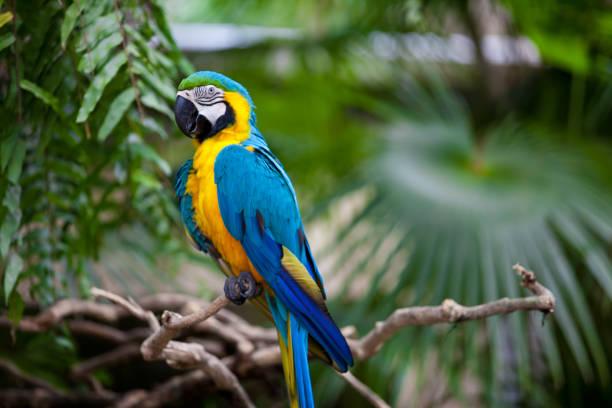 grande papagaio azul-amarelo - arara vermelha retrato - fotografias e filmes do acervo