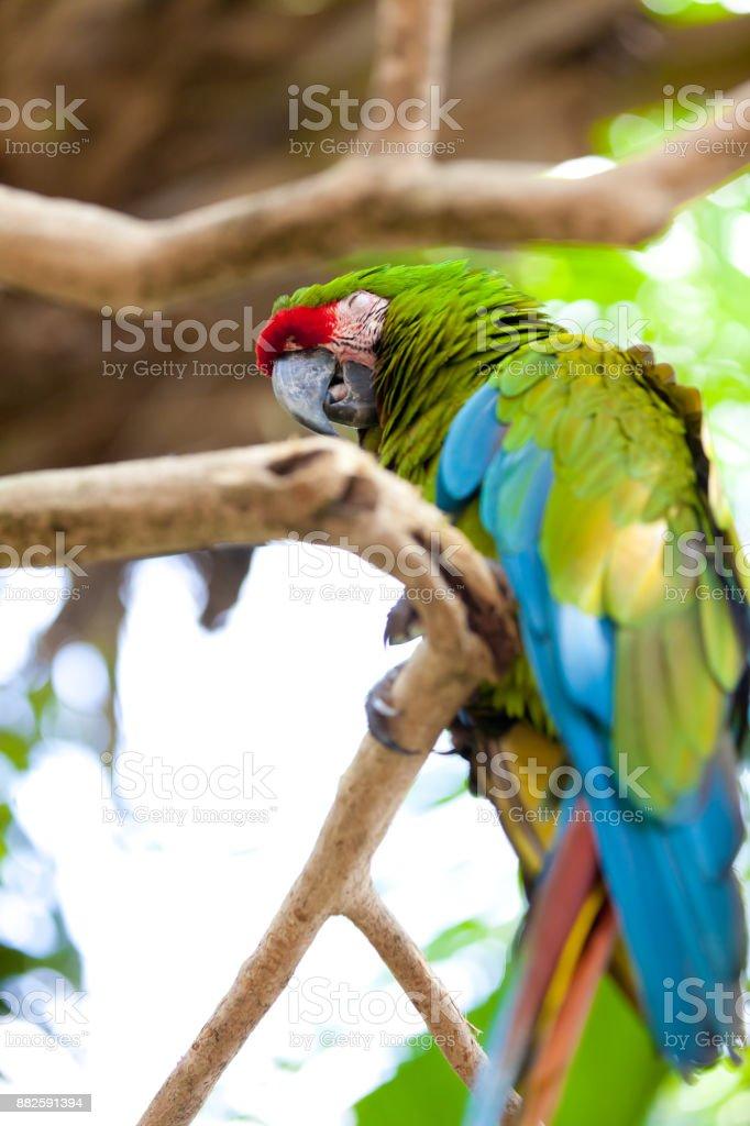 Grande papagaio azul-amarelo - foto de acervo