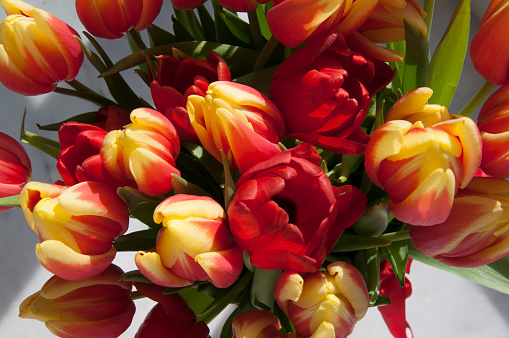 Big bouquet of red and yellow tulips, white background, top view