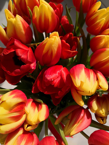 Big bouquet of red and yellow tulips, top view, macro