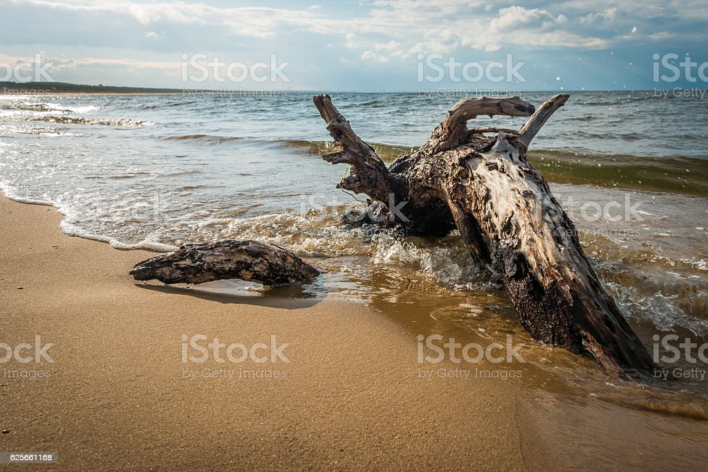 Big branch is lying on the shore hitted by waves stock photo