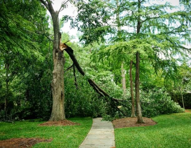 Big Broken Tree Limb stock photo