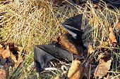 istock Big Brown Bat 916471716