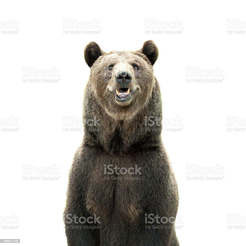 Big ours brun isolé sur fond blanc - Photo