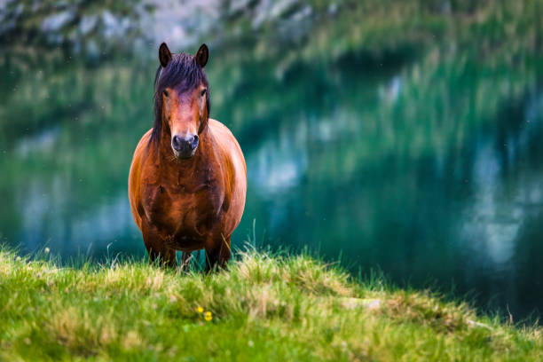 Big brown horse by a lake stock photo