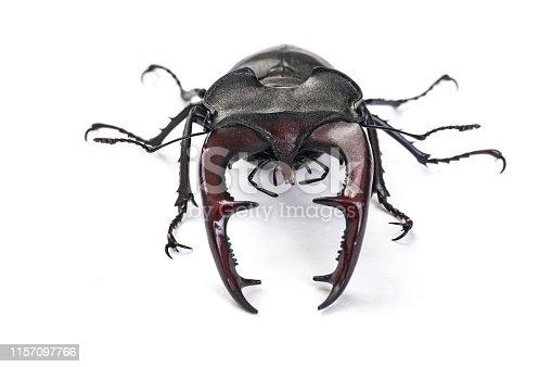 Big bug (Lucanus cervus) isolated on white background