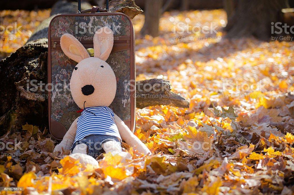big bunny lying on the leaves photo libre de droits