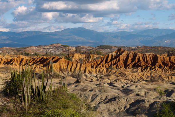 big cactuses in red desert, tatacoa desert, colombia, latin america, clouds and sand, red sand in desert stock photo