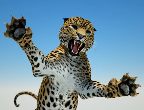 big cat hunting - tiger fur stock photos and pictures