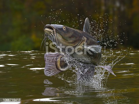 Big catfish in river jumping out of water 3d render