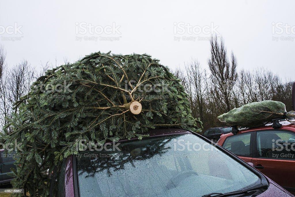 Big Christmas tree on top of car stock photo