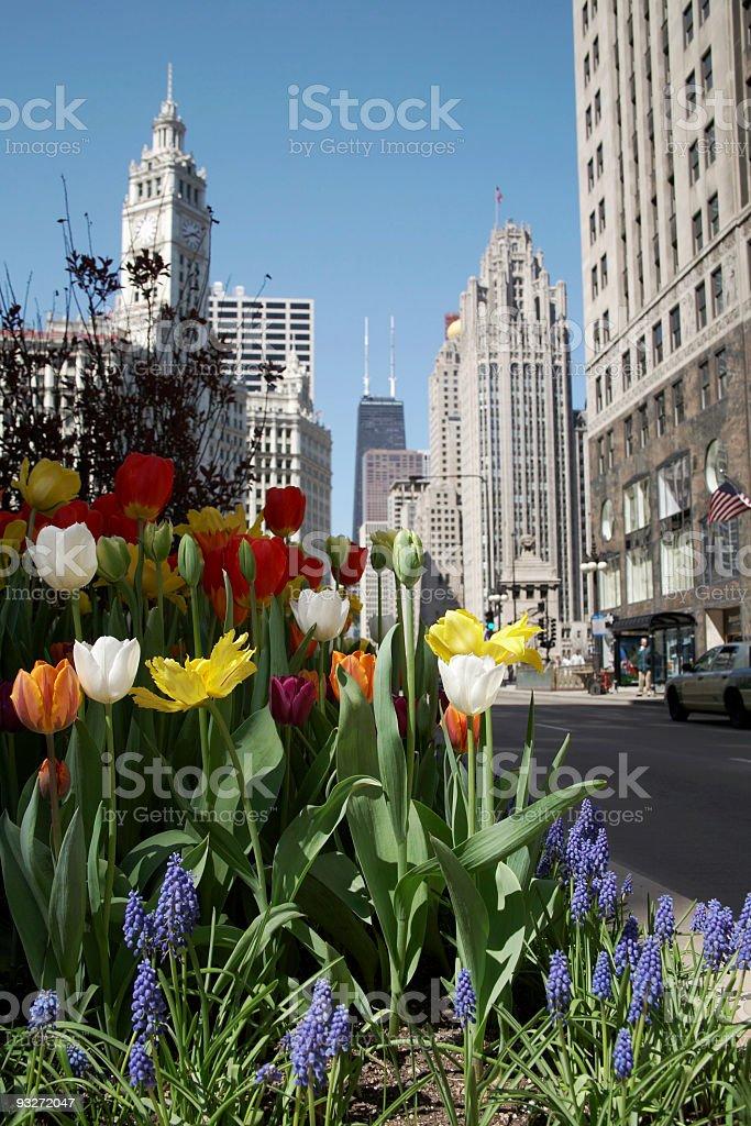 Big City Nature royalty-free stock photo