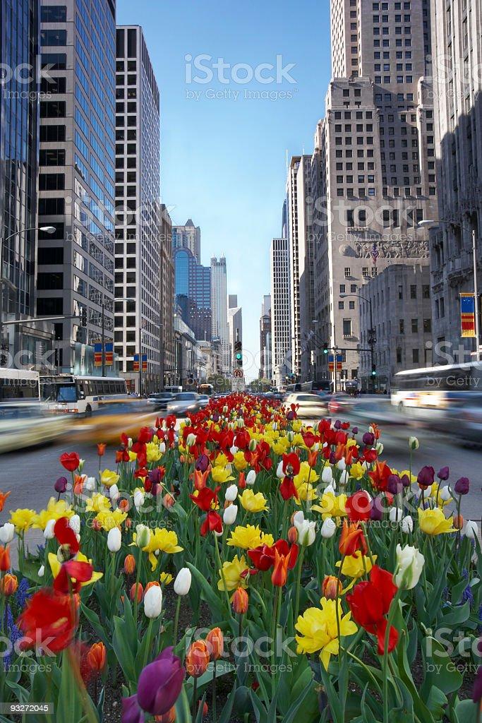 Big City Springtime royalty-free stock photo