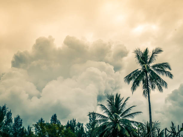 Big clouds forming in sky. Tropical rain forest and top of the trees in foreground. stock photo
