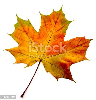 A perfect autumnal leaf, displaying a range of warm tones. Over white.   [url=http://www.istockphoto.com/search/lightbox/43309#171383aa][img]http://vladgans.ru/stock/lightbox_autumnal.jpg[/img][/url]   [url=http://www.istockphoto.com/search/lightbox/11153382][img]http://www.ljplus.ru/img4/n/e/neoromantika/people-_IMG_0146_33.jpg[/img][/url]  [url=file_closeup.php?id=14626664][img]file_thumbview_approve.php?size=1&id=14626664[/img][/url] [url=file_closeup.php?id=14626511][img]file_thumbview_approve.php?size=1&id=14626511[/img][/url] [url=file_closeup.php?id=14621333][img]file_thumbview_approve.php?size=1&id=14621333[/img][/url] [url=file_closeup.php?id=14619751][img]file_thumbview_approve.php?size=1&id=14619751[/img][/url] [url=file_closeup.php?id=14619211][img]file_thumbview_approve.php?size=1&id=14619211[/img][/url] [url=file_closeup.php?id=14619005][img]file_thumbview_approve.php?size=1&id=14619005[/img][/url] [url=file_closeup.php?id=14618666][img]file_thumbview_approve.php?size=1&id=14618666[/img][/url] [url=file_closeup.php?id=14618659][img]file_thumbview_approve.php?size=1&id=14618659[/img][/url] [url=file_closeup.php?id=14615862][img]file_thumbview_approve.php?size=1&id=14615862[/img][/url] [url=file_closeup.php?id=14615690][img]file_thumbview_approve.php?size=1&id=14615690[/img][/url] [url=file_closeup.php?id=14615085][img]file_thumbview_approve.php?size=1&id=14615085[/img][/url] [url=file_closeup.php?id=14593081][img]file_thumbview_approve.php?size=1&id=14593081[/img][/url] [url=file_closeup.php?id=14592352][img]file_thumbview_approve.php?size=1&id=14592352[/img][/url] [url=file_closeup.php?id=14592118][img]file_thumbview_approve.php?size=1&id=14592118[/img][/url] [url=file_closeup.php?id=14591604][img]file_thumbview_approve.php?size=1&id=14591604[/img][/url]