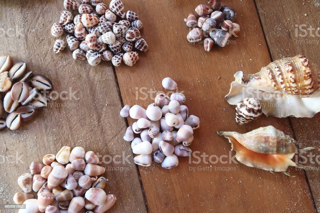 Big collection of colorful seashells on a wooden floor royalty-free stock photo