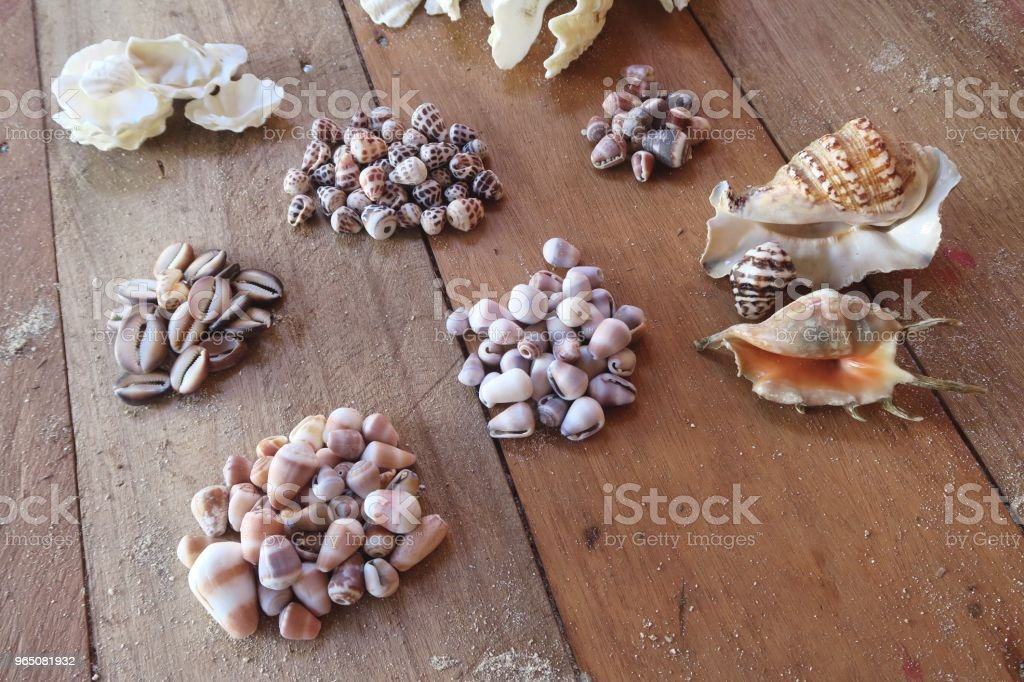 Big collection of colorful seashells on a wooden floor zbiór zdjęć royalty-free