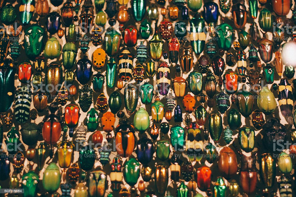 Big collection of colourful beetles stock photo