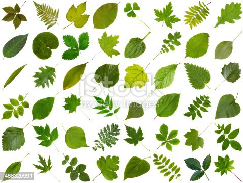 istock Big collection of different green leaves 488325991