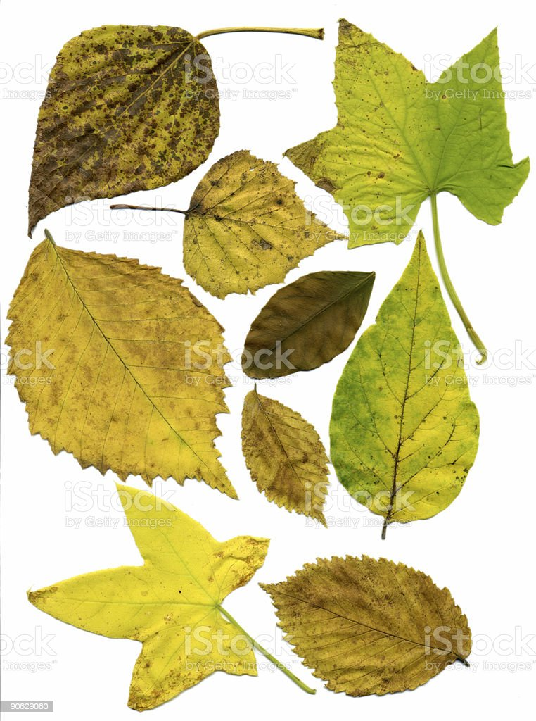 big collection of perfect autumnal leaf stock photo