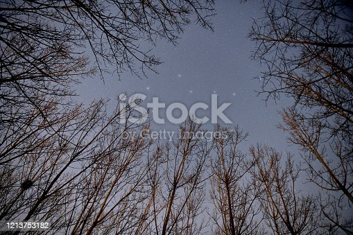 Big Dipper over the forest