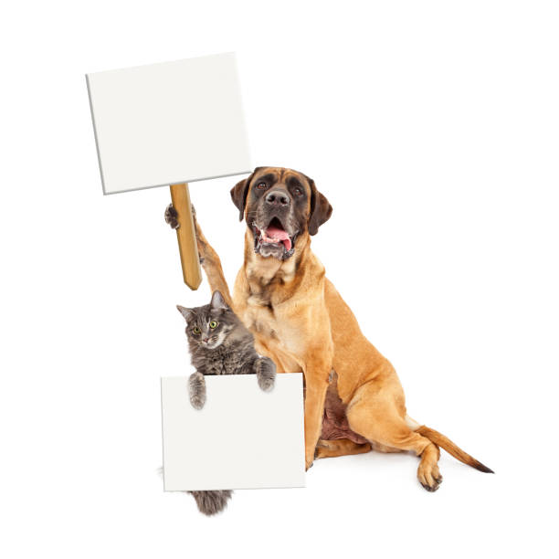 Big dog and cat holding blank signs picture id664742432?b=1&k=6&m=664742432&s=612x612&w=0&h=ptcm7hkprc7fmylkvy26q59nge8db8 l2rmxkdtxe3g=