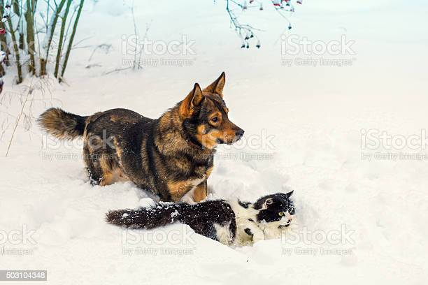 Big dog and cat playing in snow picture id503104348?b=1&k=6&m=503104348&s=612x612&h=vlwad4lc95hq3icijrog6zf919y5boosfz72w2qjdwq=