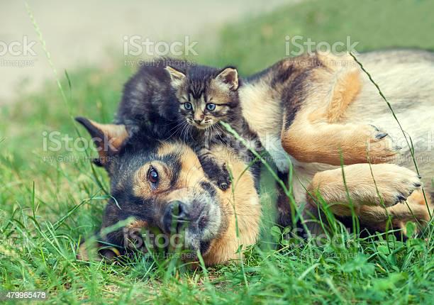 Big dog and little kitten picture id479965478?b=1&k=6&m=479965478&s=612x612&h=vm900jl8zcvtkawuq6jxqjt1azegdnhu78j6xdg3qkw=