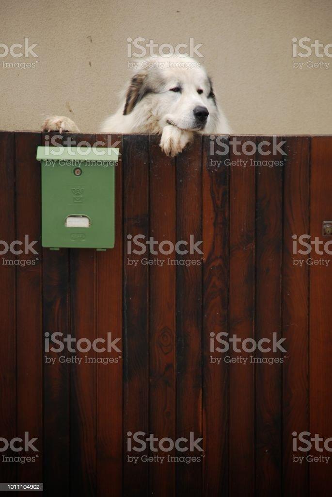Perro grande en Sanxenxo - foto de stock
