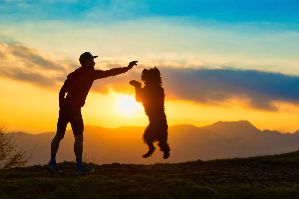 Big dog jumping to take a biscuit from a man silhouette with at picture id876880106?b=1&k=6&m=876880106&s=612x612&w=0&h=2lihr3f6ceolj hsagsakfwbrqnyu3ozebcki429je0=